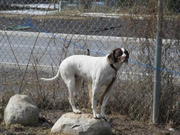 Reunited Dog Niagara Falls Grand Island Ontario On Canada