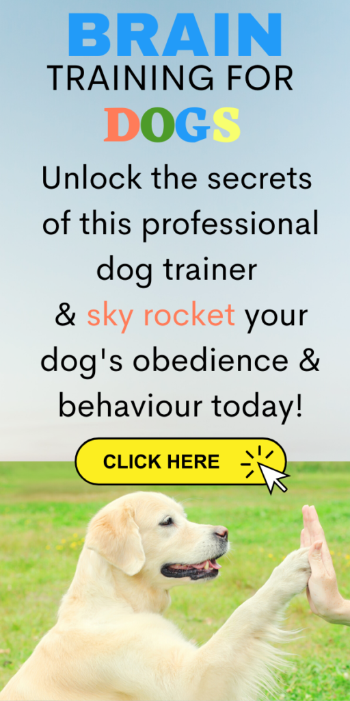 5 Incredibly Easy Tips To Training Your Dog For Life Dog Training Nz In 2020 Dog Training Training Your Dog Puppy Training Tips