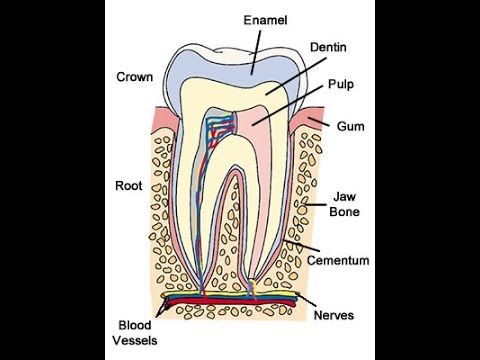 How To Heal A Tooth Nerve How To Heal Your Teeth Pain Pinterest