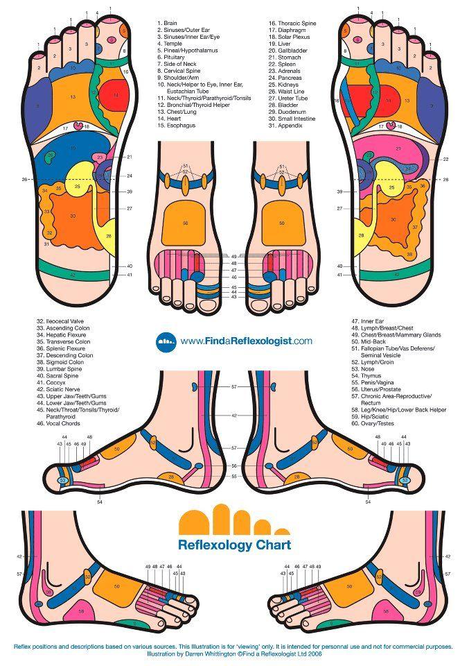 Reflexology 101 Reflexology Reflexology Chart Reflexology Foot Chart