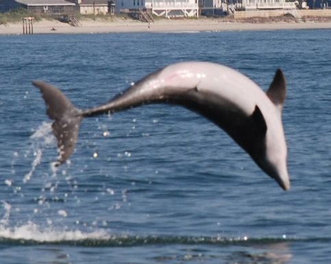 The Dolphin Experts Blue Wave Adventures Is Premiere Cruise Experience In Myrtle Beach South Carolina Area