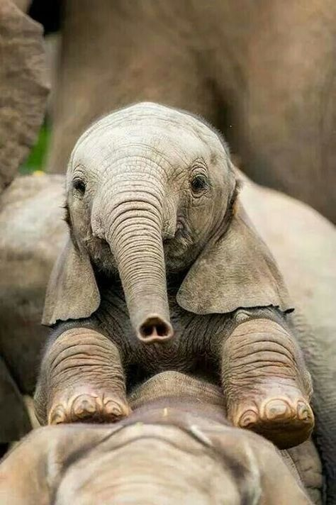 14 Images Of Baby Elephants That Will Put A Big Goofy Smile On Your Face - I Can Has Cheezburger?