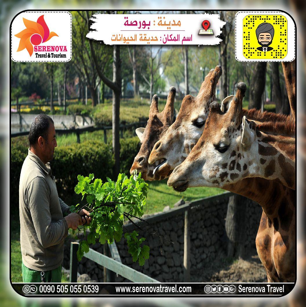 حديقة الحيوانات في بورصة