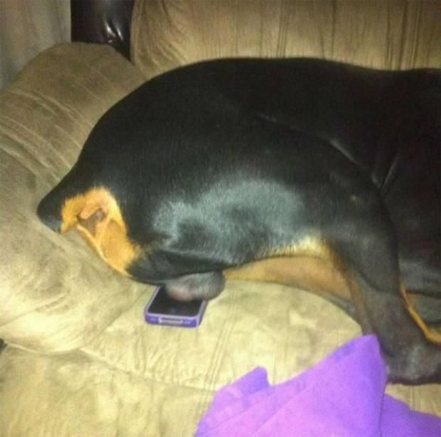 What the dog does to your iPhone
