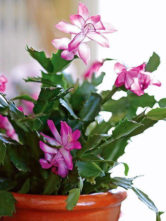 Las 10 mejores suculentas para tener en interior cuidado for Plantas crasas interior