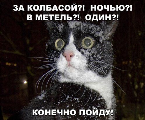 (11) Одноклассники | Смешные фото кошек, Смешные мемы о ...