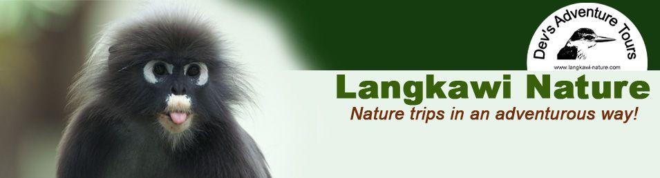 Langkawi : Dev's Adventure Tours, great mangroves tour.