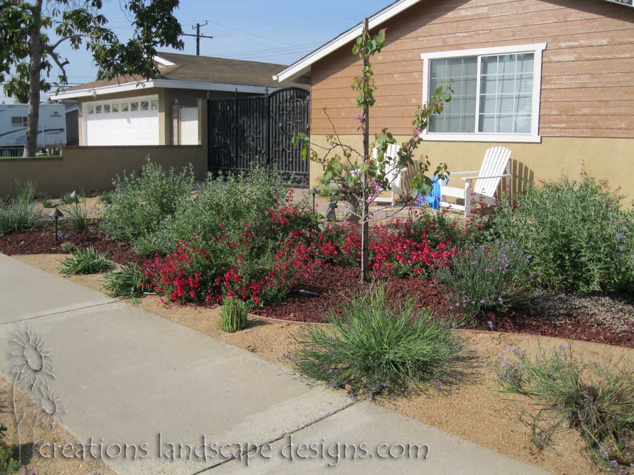 This garden is a mixture of drought tolerant plants for Drought tolerant yard