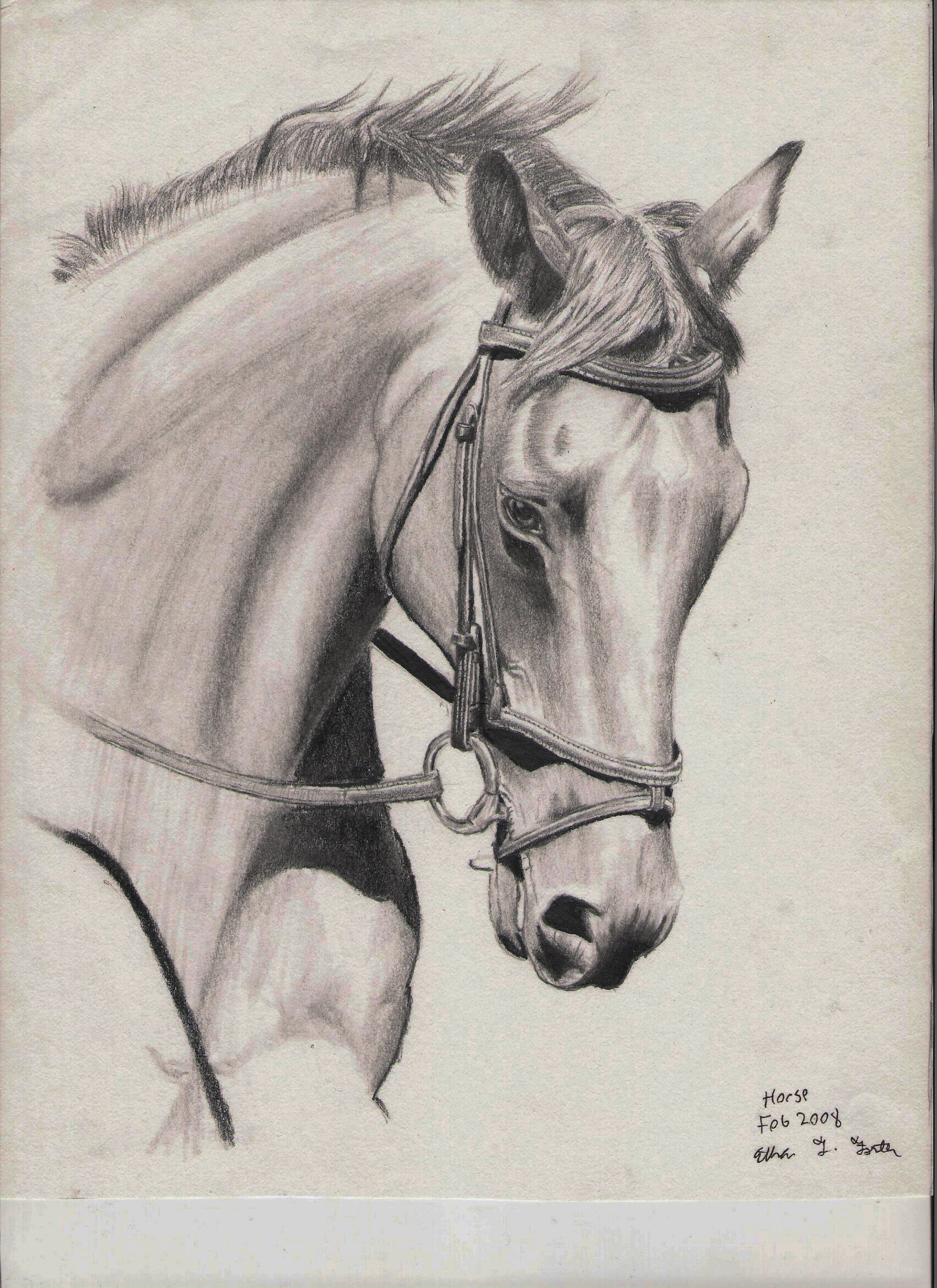 Horse Pencil Drawing In H, F, Hb, And Pencil Horse Drawing