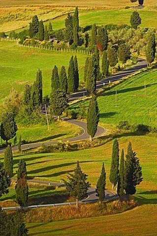 cipreses a lo largo de la carretera de Pienza a Montepulciano, Valle de Orcia, patrimonio de la humanidad, Provincia de Siena, Toscana, Italia, Europa