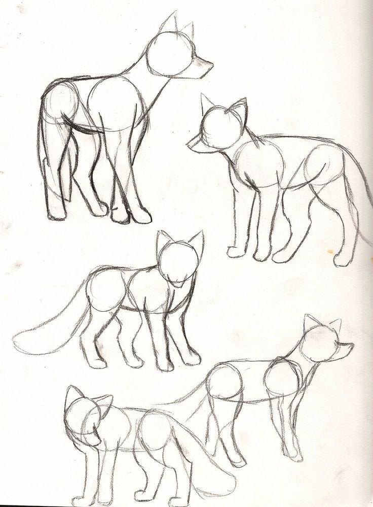 Fox Drawing Base : drawing, Marie, Sørensen, Astonishing,, Awe-inspiring, Bocetos, Animales,, Dibujo, Dibujos