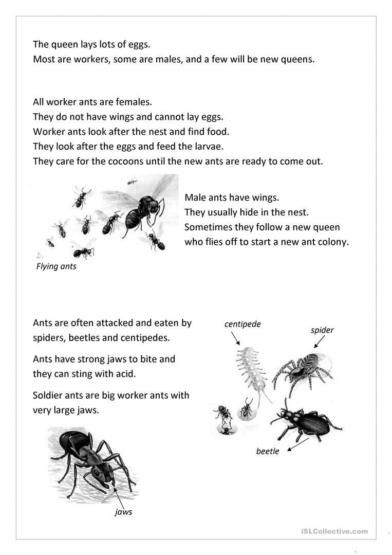 Ants English Esl Worksheets For Distance Learning And Physical Classrooms Ants Worksheet Ants Preschool Ant [ 1079 x 763 Pixel ]