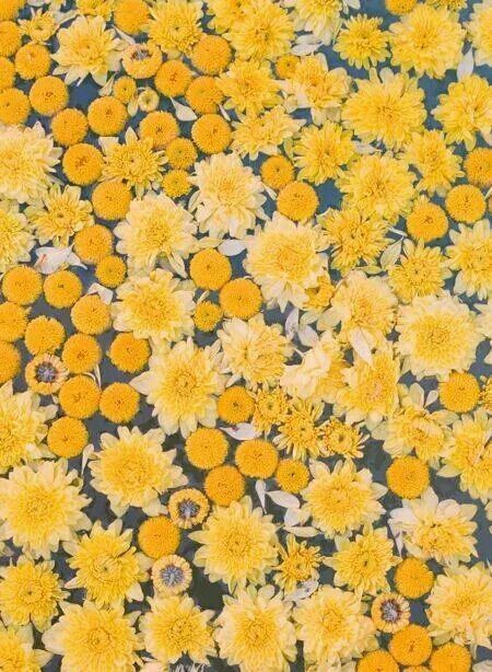 #flowers #floral #posies #blossoms - #blossoms #floral #flowers #gelb #posies #yellowaesthetic