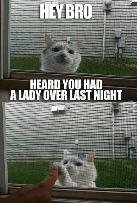 Cat bro