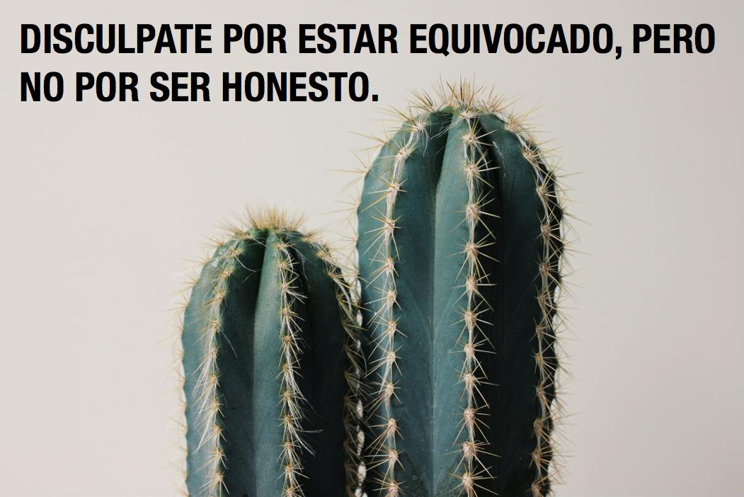 Pierde la panza Cactus planta