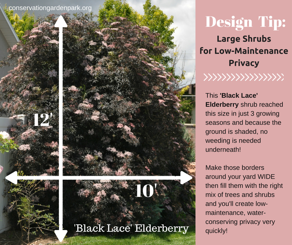 Use Large Shrubs To Create Privacy Quickly Also Make Sure The Bed Is At