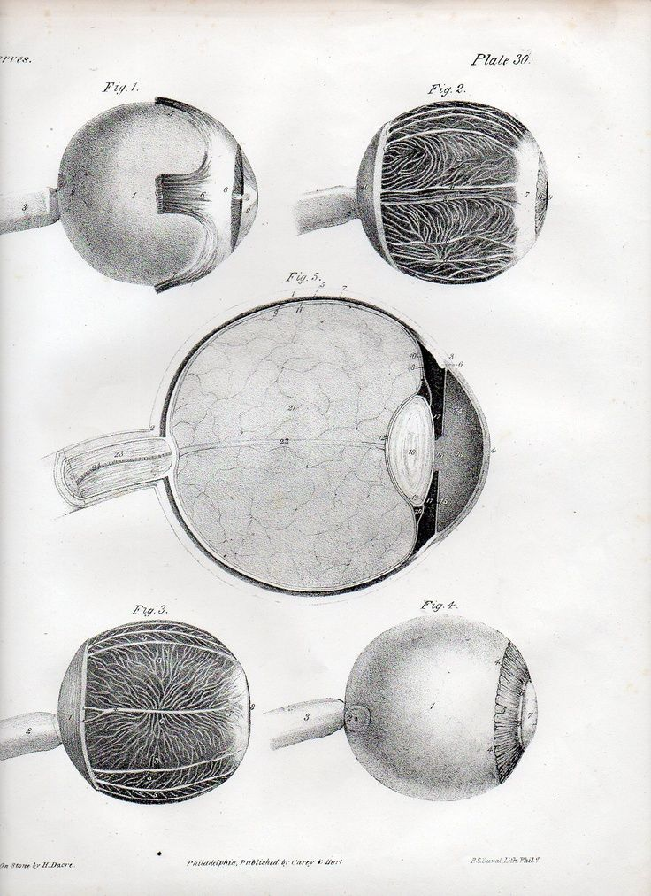 Anatomía del ojo de Jones Quain y Richard Quain (1844) | Ephemera ...