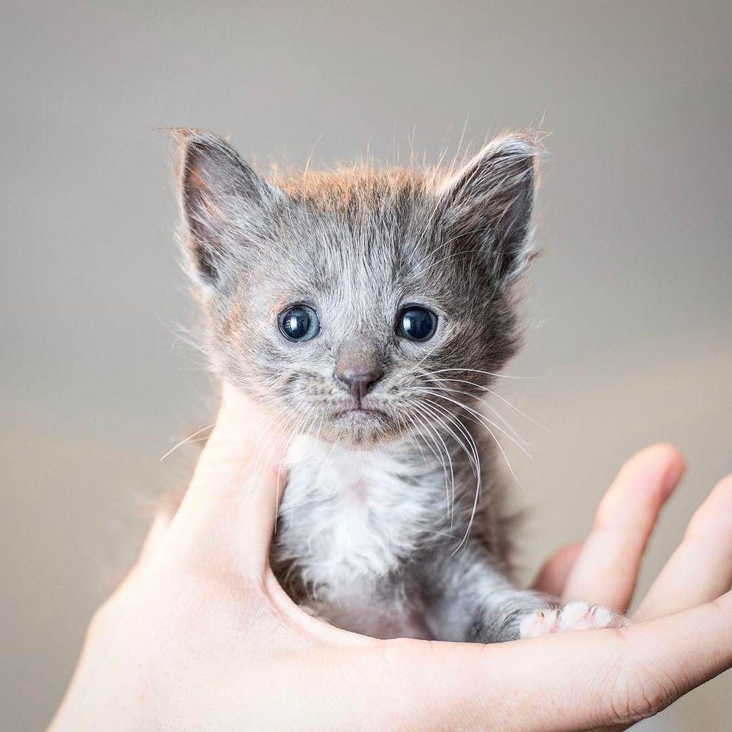 Kitten Lady Kittenxlady Twitter Kittens Cutest Cute Cats Kitten Pictures