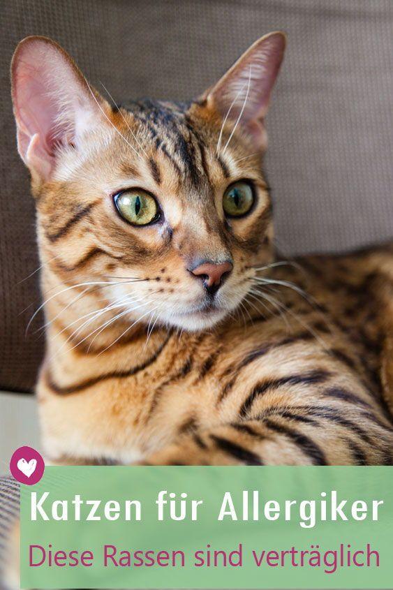 Diese Katzen Sind Fur Allergiker Geeignet In 2020 Katzen Katzen Rassen Katzen Fur Allergiker