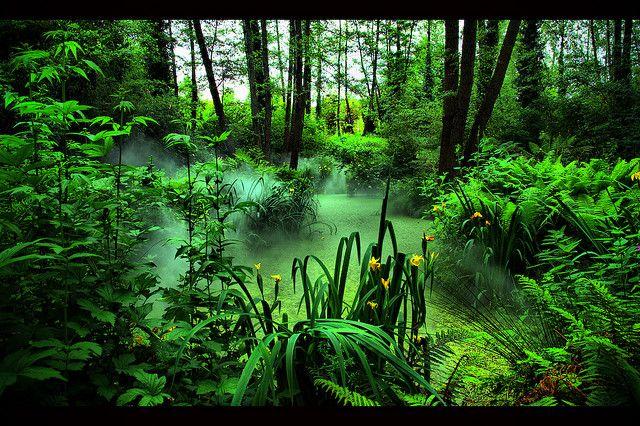 Forest Haze Loire Pays De La Loire Et Vendee