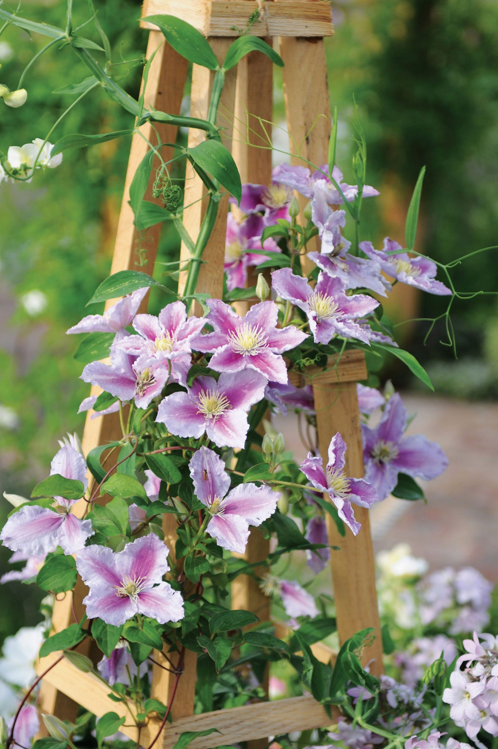 50 Flowers Every Garden Needs Clematis Gardens And Flowers