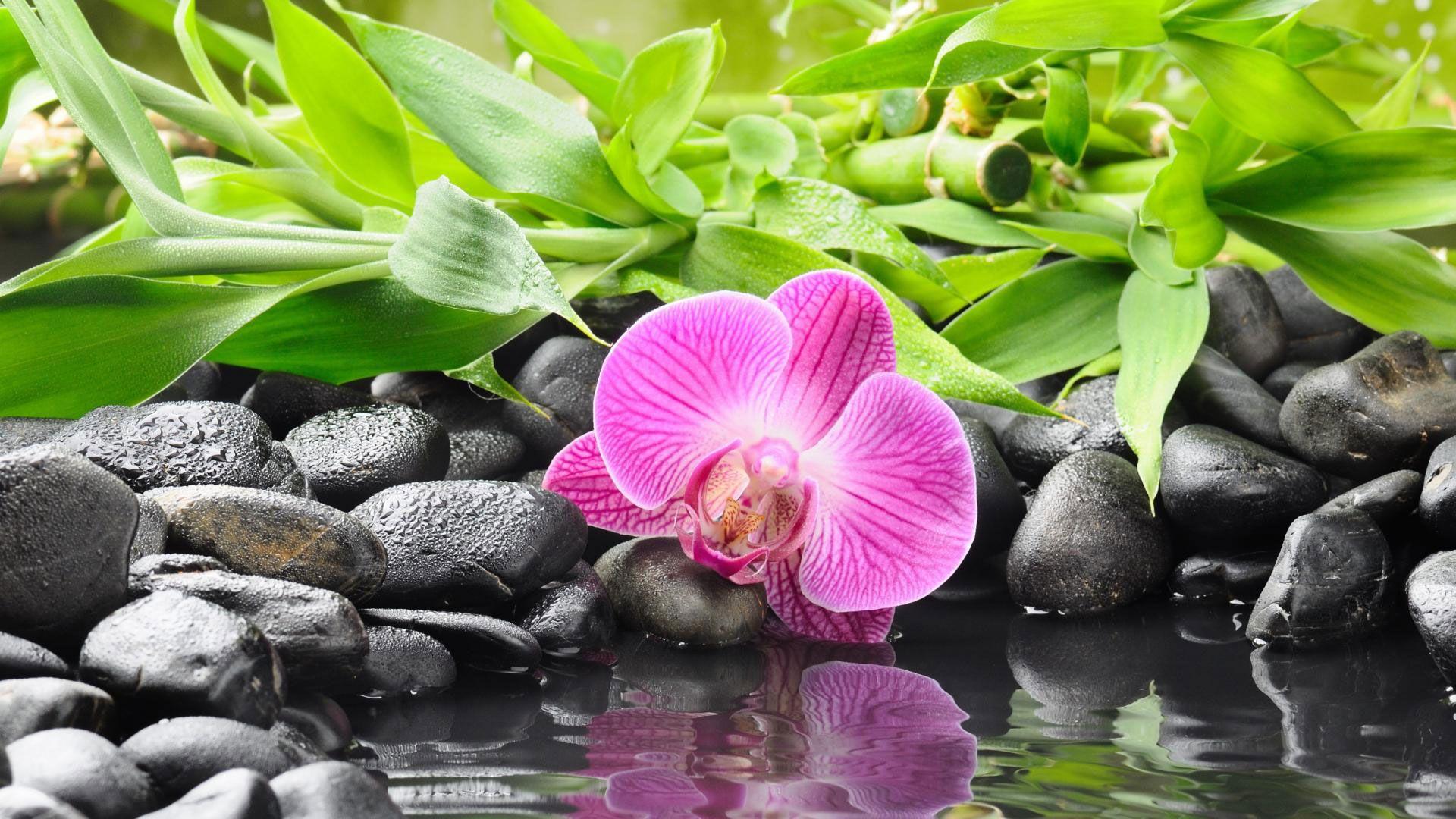Hd pics photos attractive best black pebbles orchid water drops