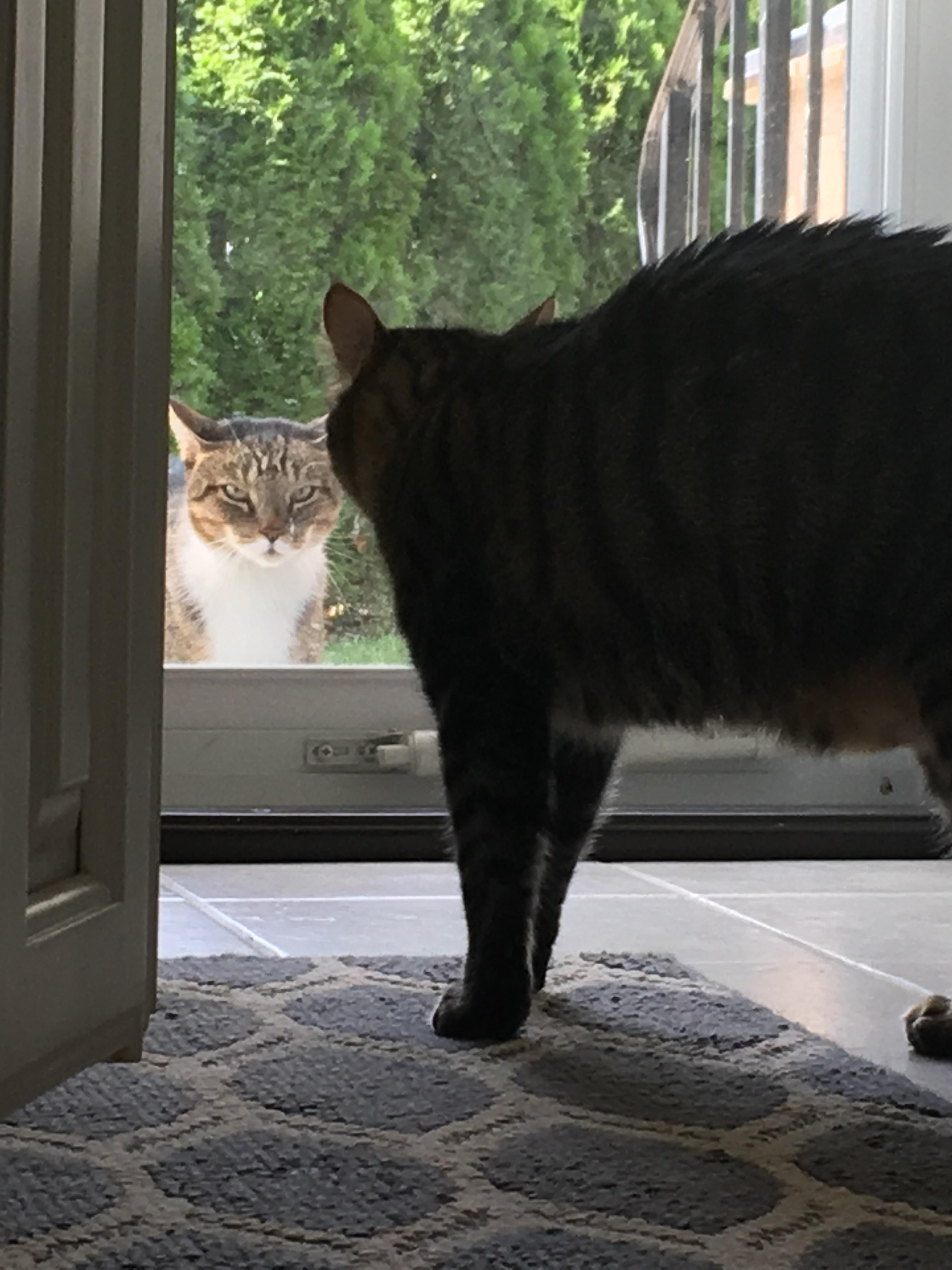 Watching my sisters cats and this stranger showed up at the door. Needless to say & Watching my sisters cats and this stranger showed up at the door ... pezcame.com