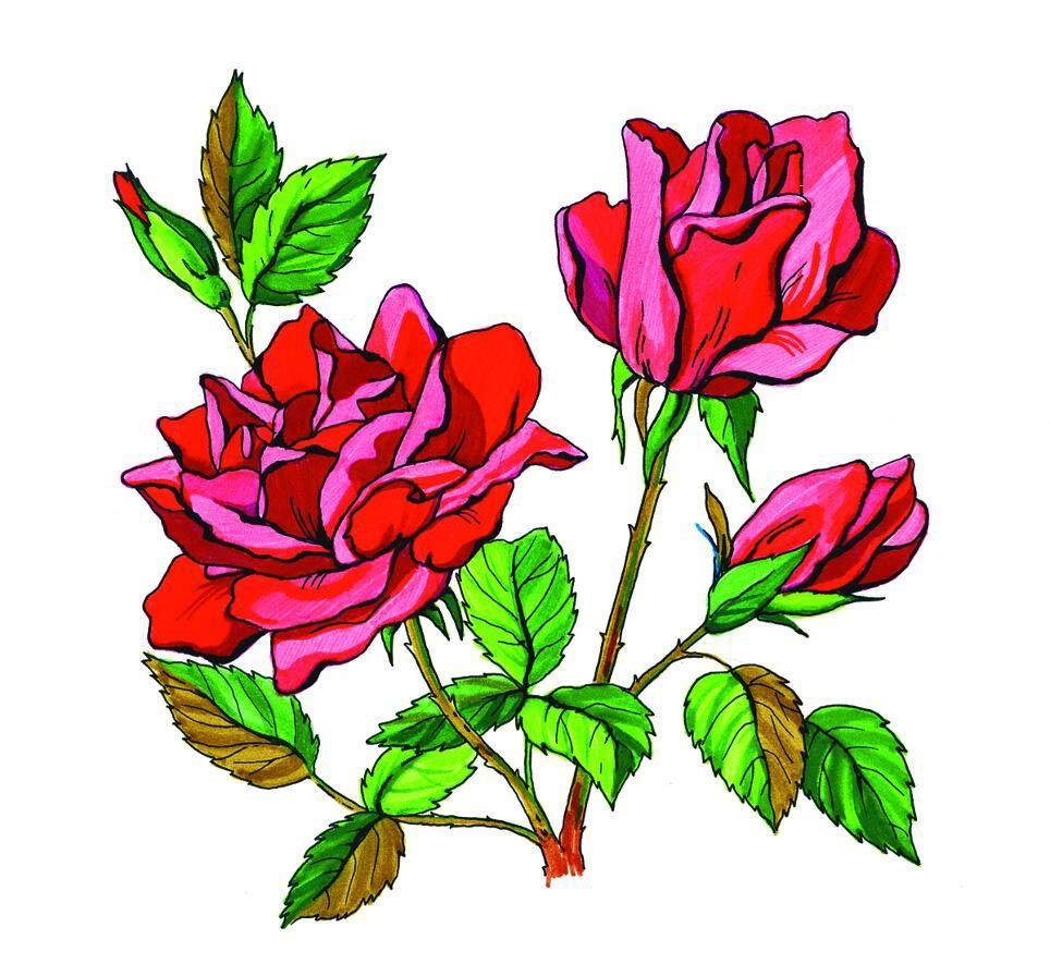 Цветные картинки для распечатки цветы