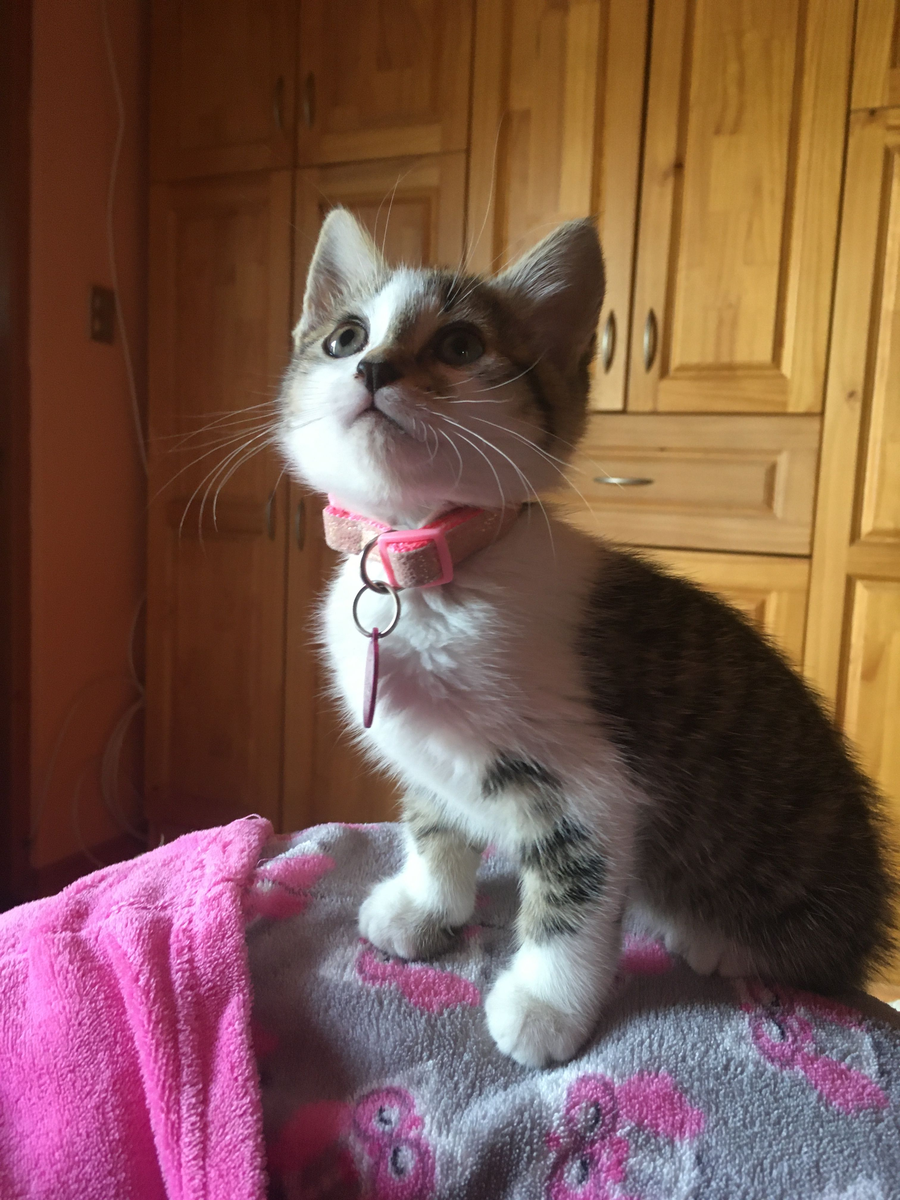 Gatita Cute Cats Animals