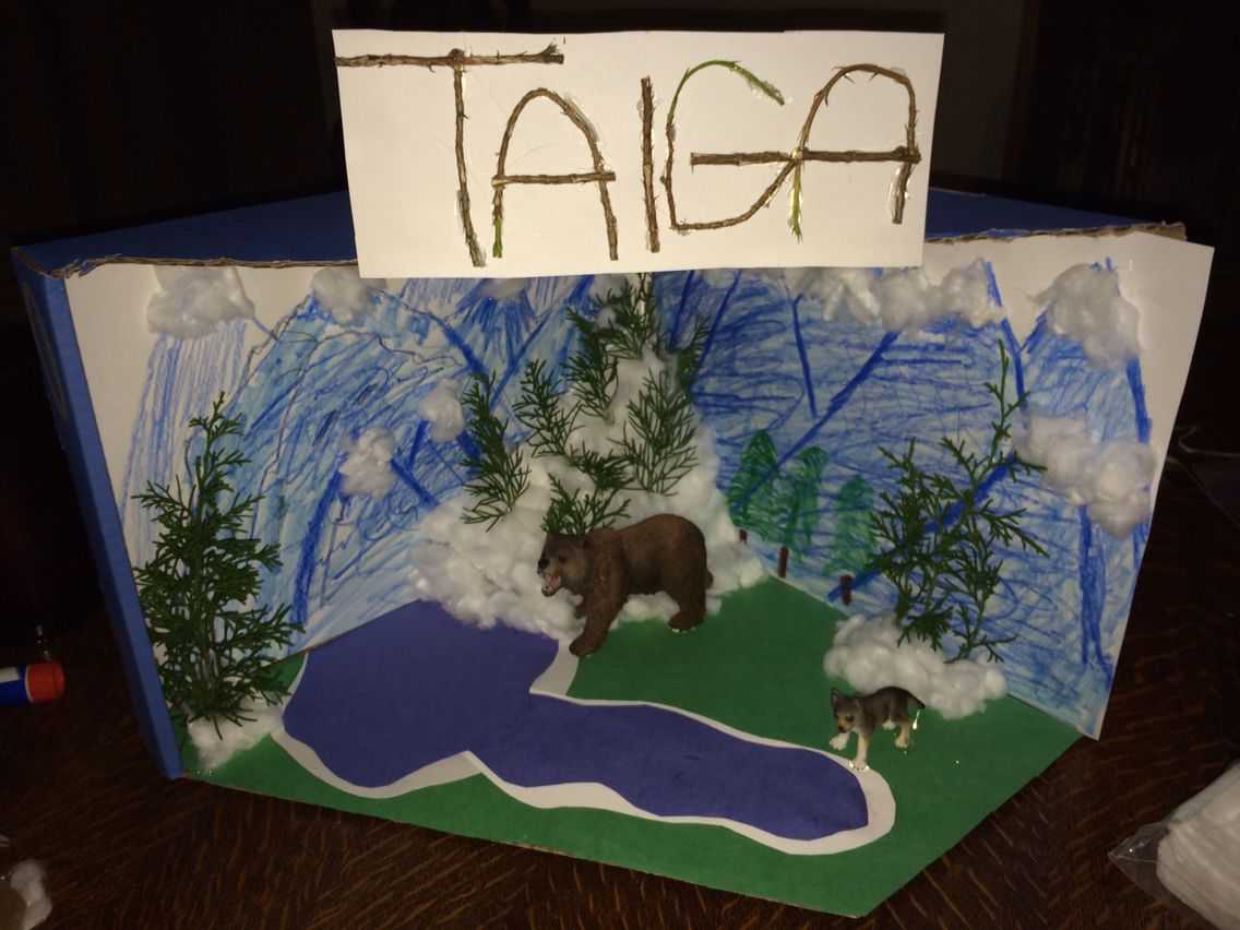 Taiga Biome Box Project