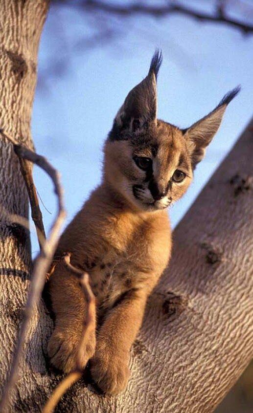 Pin by kate kamal on Animal Kingdom + people... Animals