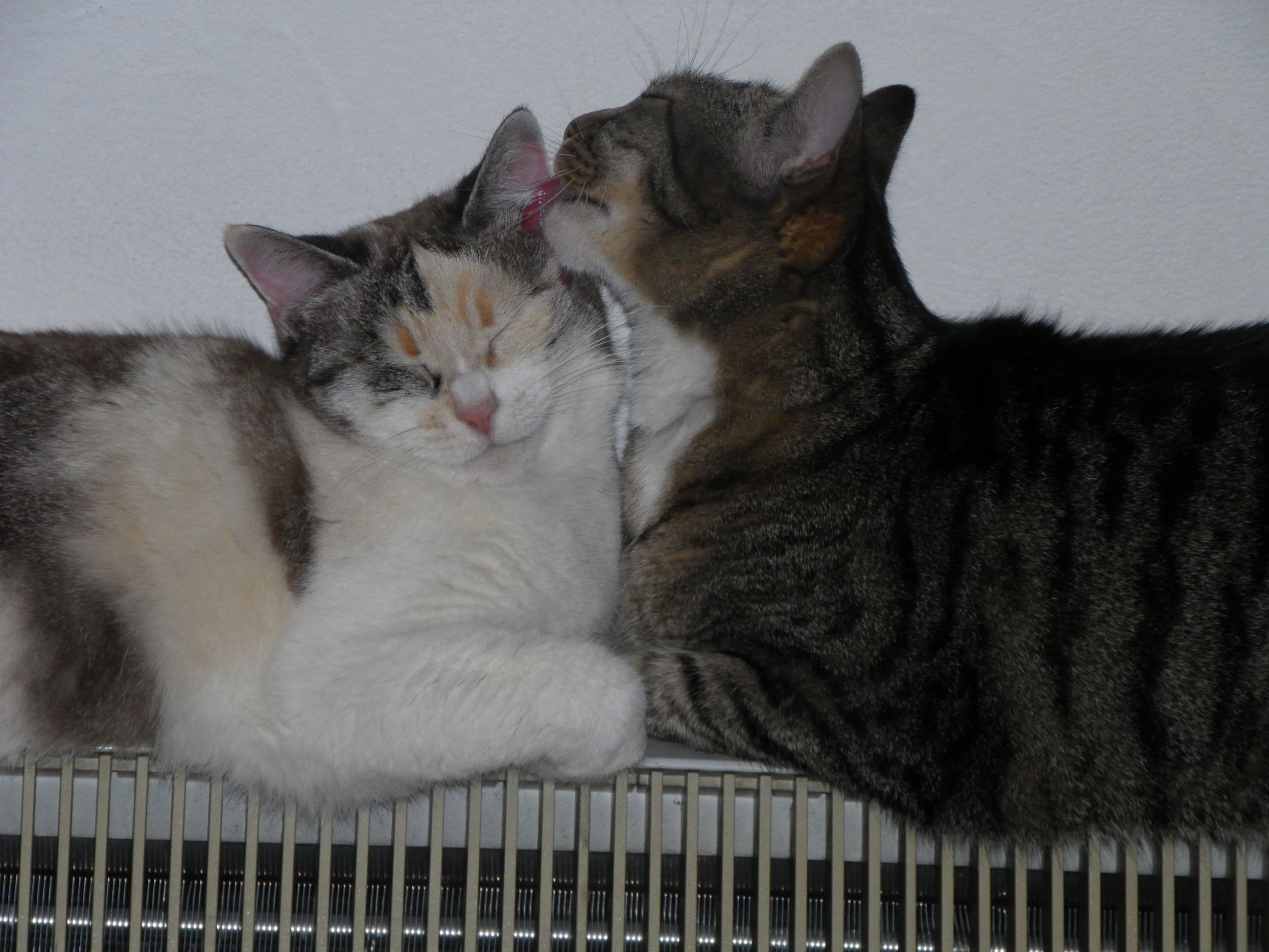 my sweet cats <3