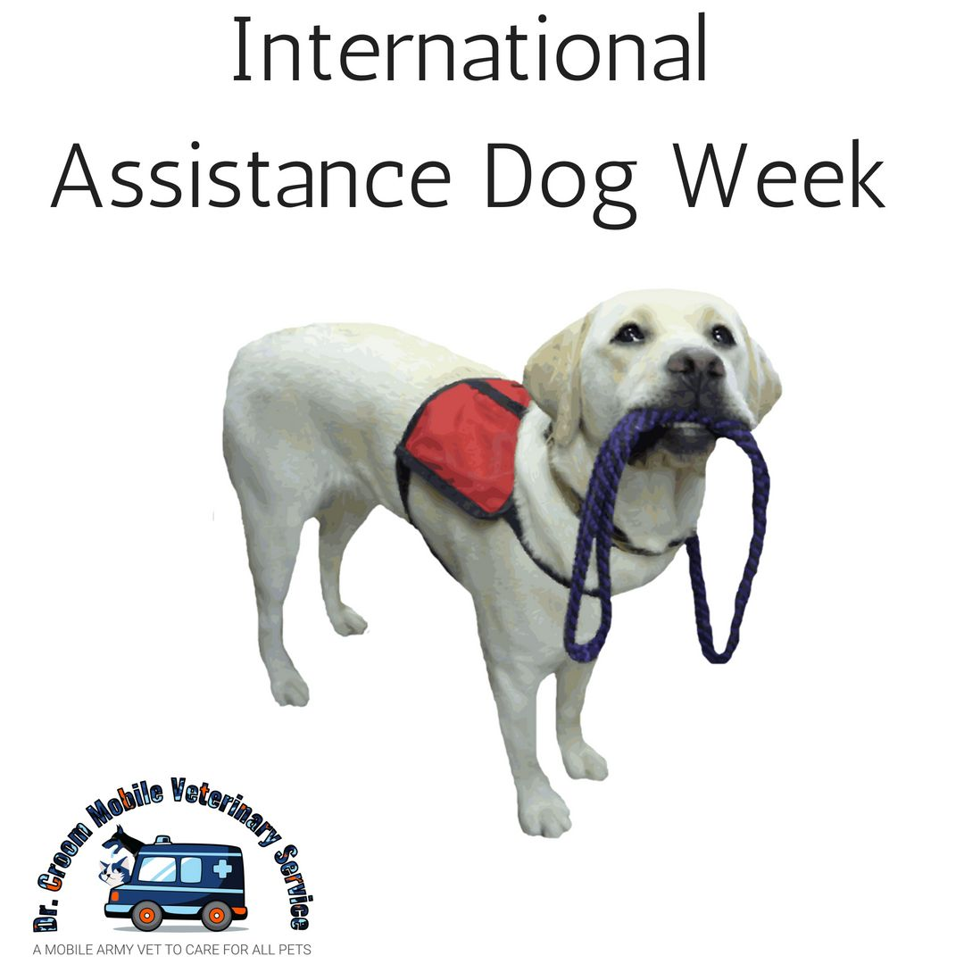 International Assistance Dog Week recognizes all the