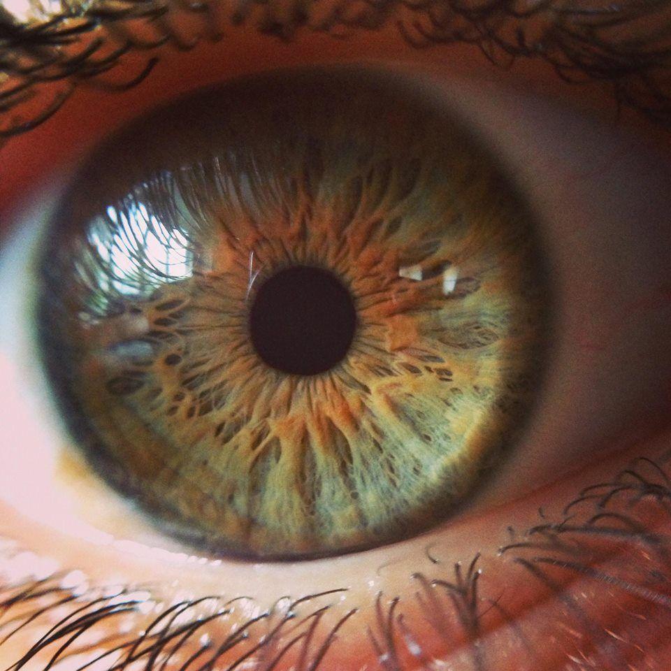Macro Shot Of A Green Eye Photography Close Up Hd Eye