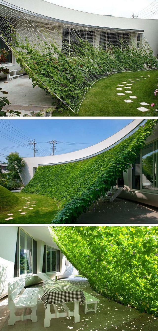 Growing protection from sun - Imgur | fazenda | Pinterest | Gärten ...