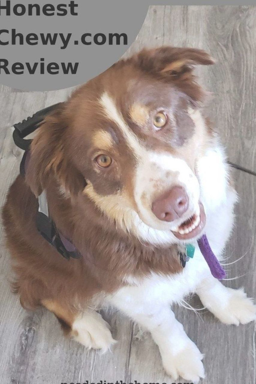Honest Review On Dog Food And A Harness We Bought For Our 16 Year