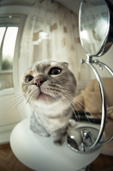 Cat by Vitaly Zimarin