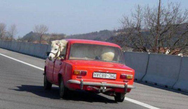 czerwony samochód z konikiem