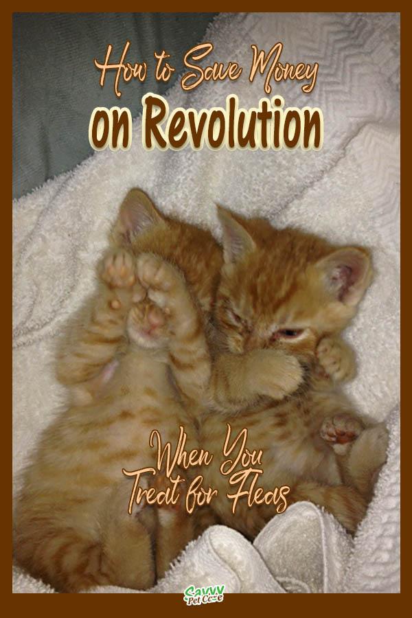 Save Money Treating Fleas with Revolution Fleas, Pets