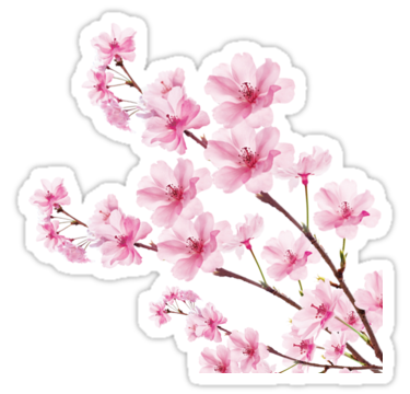 Acura Integra That Tree Is The Cherry On Top Boccittographics Carshow Nvusontario Decals Cherryblossom Cherryblossomdecal Acura Integra Acura Car Show