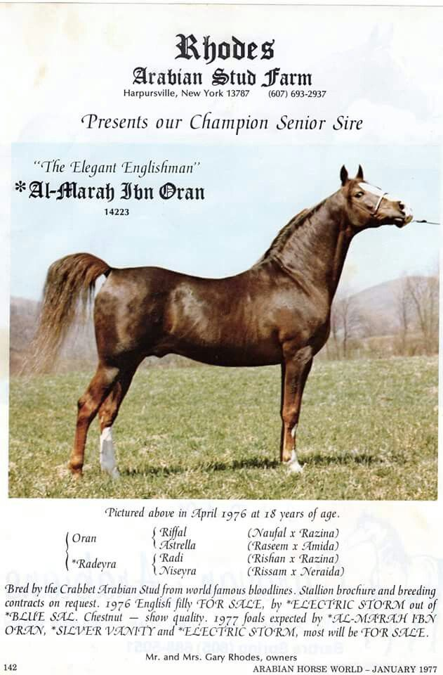 Al Marah Ibn Oran Arabische Pferde Pinterest Horse and - Horse Sales Contracts