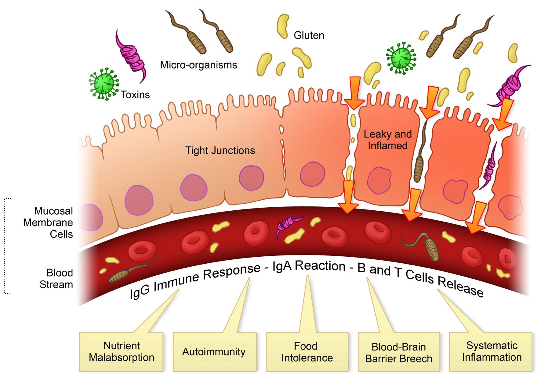 American Super Collagen | Heal leaky gut, Digestive disorders