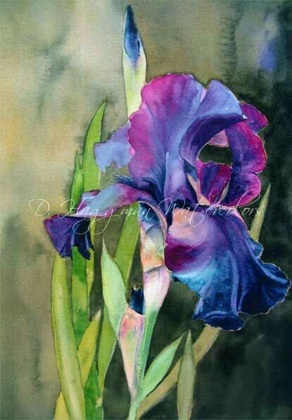 D Haggmau Watercolor Watercolor Flowers Iris Painting Iris Art