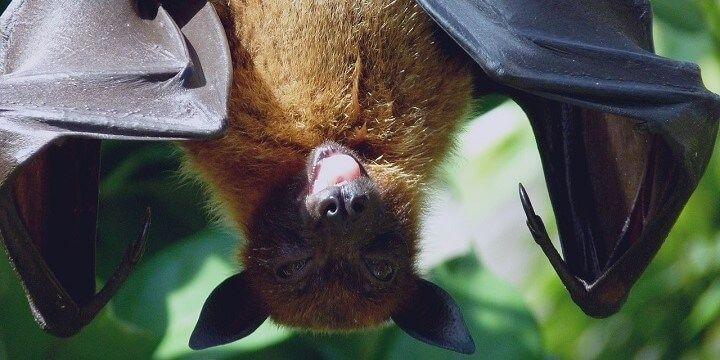 Bat Cave, Sumatra, Indonesia