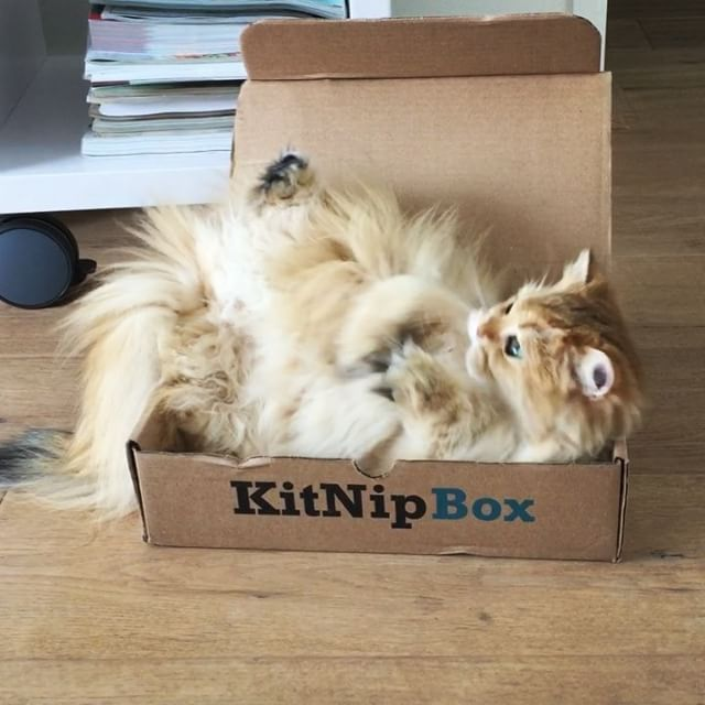 When you're trying to sleep, but it's too bloody hot. || Get your first kitnipbox with a 15% discount by using the code SMOOTHIE15 on kitnipbox.com