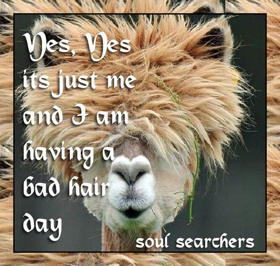 bad hair day quotes | Having a bad hair day | Quotes Life's Lil