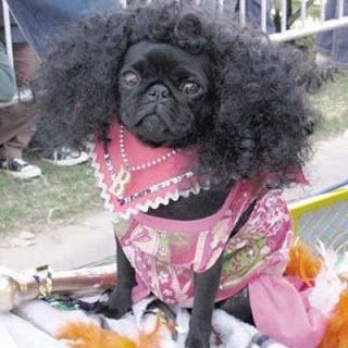 Pug With An Afro Pugs Pug Love Pugs In Costume