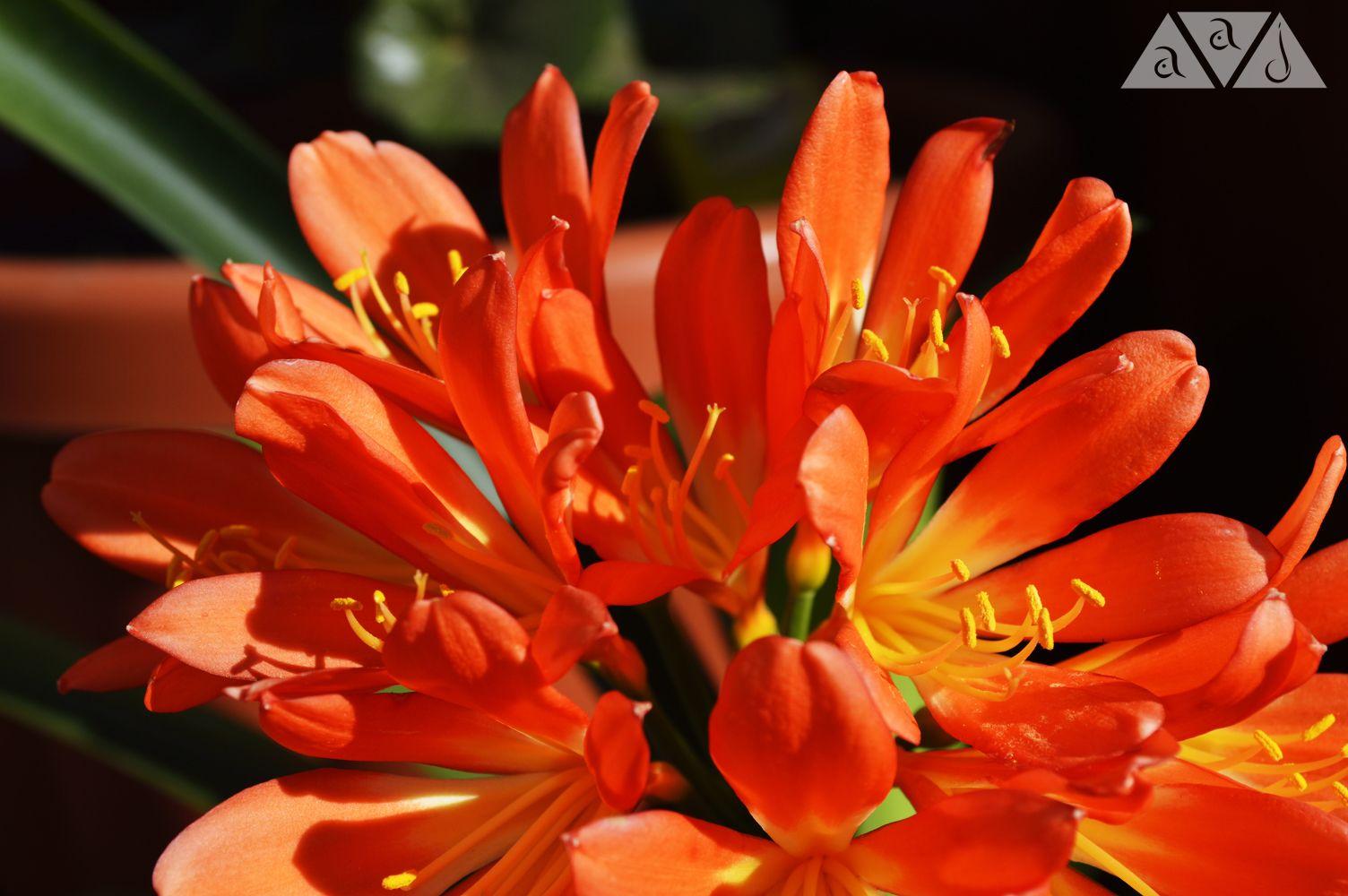flores_2