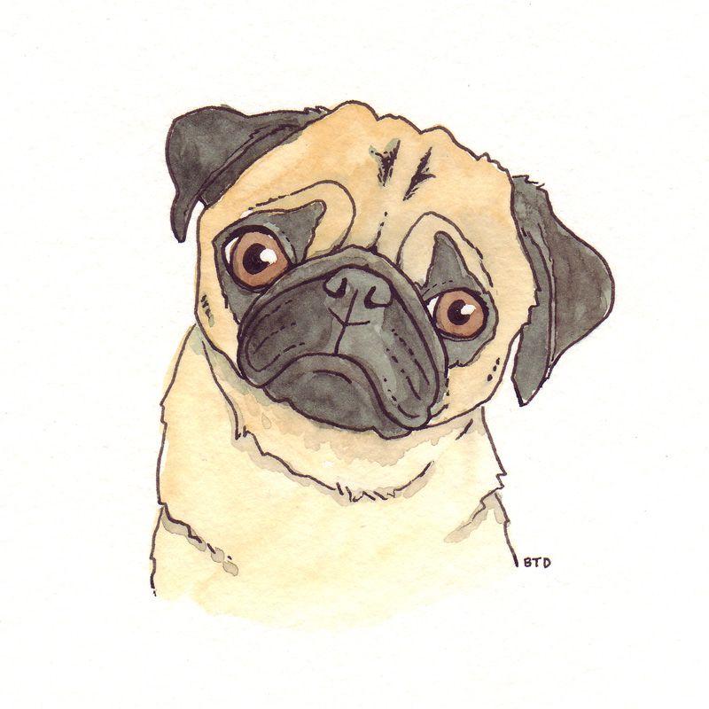 Pug Drawings Gallery Pets Drawing Pug Art Dog Art