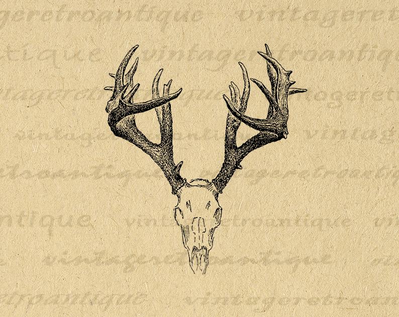 Printable Digital Deer Skull Graphic Antlers Illustration Download Image Vintage Antlers Clip Art For Transfers Etc 300dpi No 1248 Antler Illustration Clip Art Vintage Deer Skulls